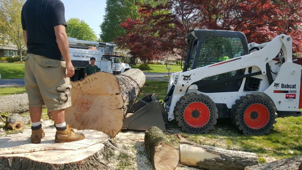 Chula Vista-National City CA Tree Trimming and Stump Grinding Services-We Offer Tree Trimming Services, Tree Removal, Tree Pruning, Tree Cutting, Residential and Commercial Tree Trimming Services, Storm Damage, Emergency Tree Removal, Land Clearing, Tree Companies, Tree Care Service, Stump Grinding, and we're the Best Tree Trimming Company Near You Guaranteed!