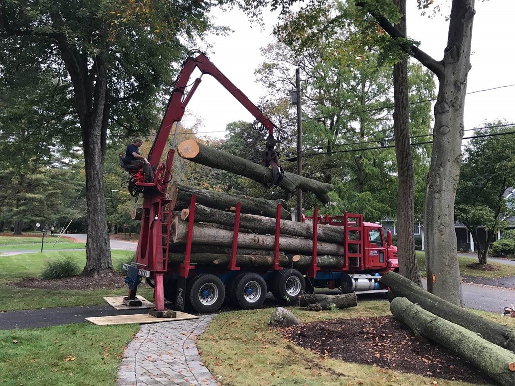 Commercial Tree Services-National City CA Tree Trimming and Stump Grinding Services-We Offer Tree Trimming Services, Tree Removal, Tree Pruning, Tree Cutting, Residential and Commercial Tree Trimming Services, Storm Damage, Emergency Tree Removal, Land Clearing, Tree Companies, Tree Care Service, Stump Grinding, and we're the Best Tree Trimming Company Near You Guaranteed!