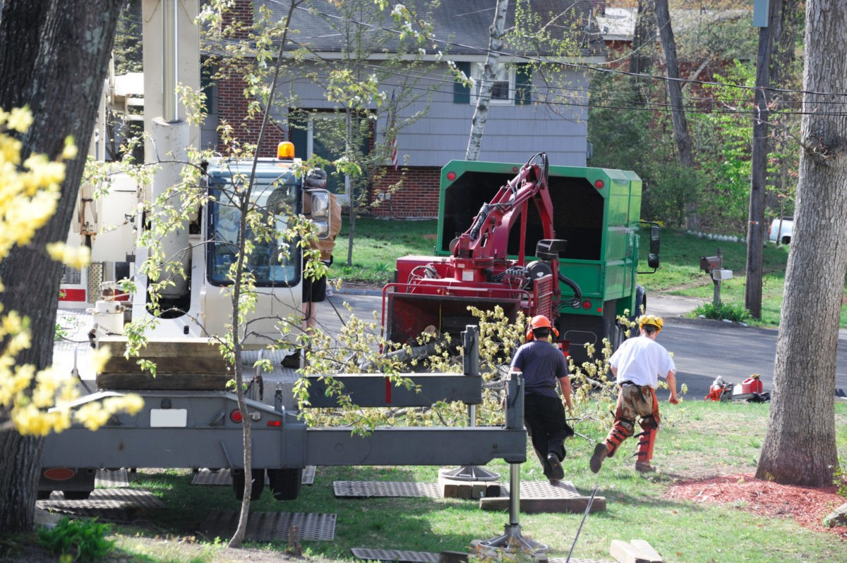 Contact-Us-National-City-CA-Tree-Trimming-and-Stump-Grinding-Services-We Offer Tree Trimming Services, Tree Removal, Tree Pruning, Tree Cutting, Residential and Commercial Tree Trimming Services, Storm Damage, Emergency Tree Removal, Land Clearing, Tree Companies, Tree Care Service, Stump Grinding, and we're the Best Tree Trimming Company Near You Guaranteed!