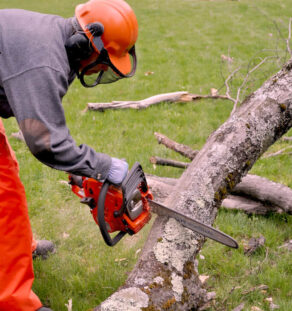 Emergency Tree Removal-National City CA Tree Trimming and Stump Grinding Services-We Offer Tree Trimming Services, Tree Removal, Tree Pruning, Tree Cutting, Residential and Commercial Tree Trimming Services, Storm Damage, Emergency Tree Removal, Land Clearing, Tree Companies, Tree Care Service, Stump Grinding, and we're the Best Tree Trimming Company Near You Guaranteed!