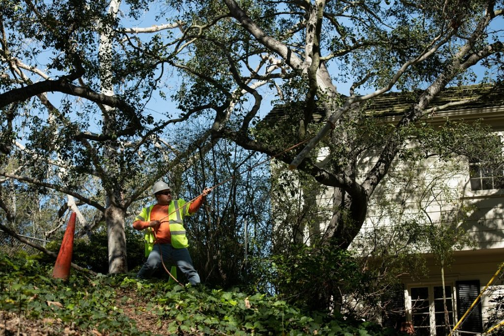 Logan Heights-National City CA Tree Trimming and Stump Grinding Services-We Offer Tree Trimming Services, Tree Removal, Tree Pruning, Tree Cutting, Residential and Commercial Tree Trimming Services, Storm Damage, Emergency Tree Removal, Land Clearing, Tree Companies, Tree Care Service, Stump Grinding, and we're the Best Tree Trimming Company Near You Guaranteed!