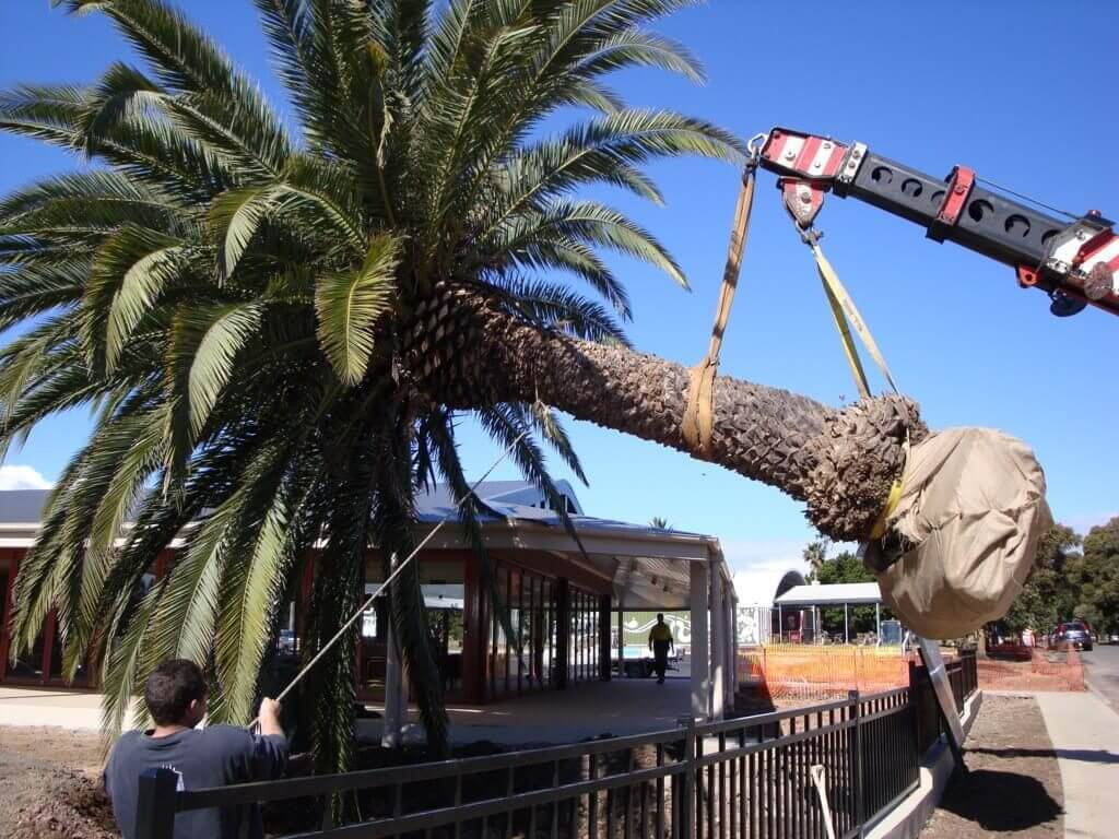 Palm Tree Removal-National City CA Tree Trimming and Stump Grinding Services-We Offer Tree Trimming Services, Tree Removal, Tree Pruning, Tree Cutting, Residential and Commercial Tree Trimming Services, Storm Damage, Emergency Tree Removal, Land Clearing, Tree Companies, Tree Care Service, Stump Grinding, and we're the Best Tree Trimming Company Near You Guaranteed!