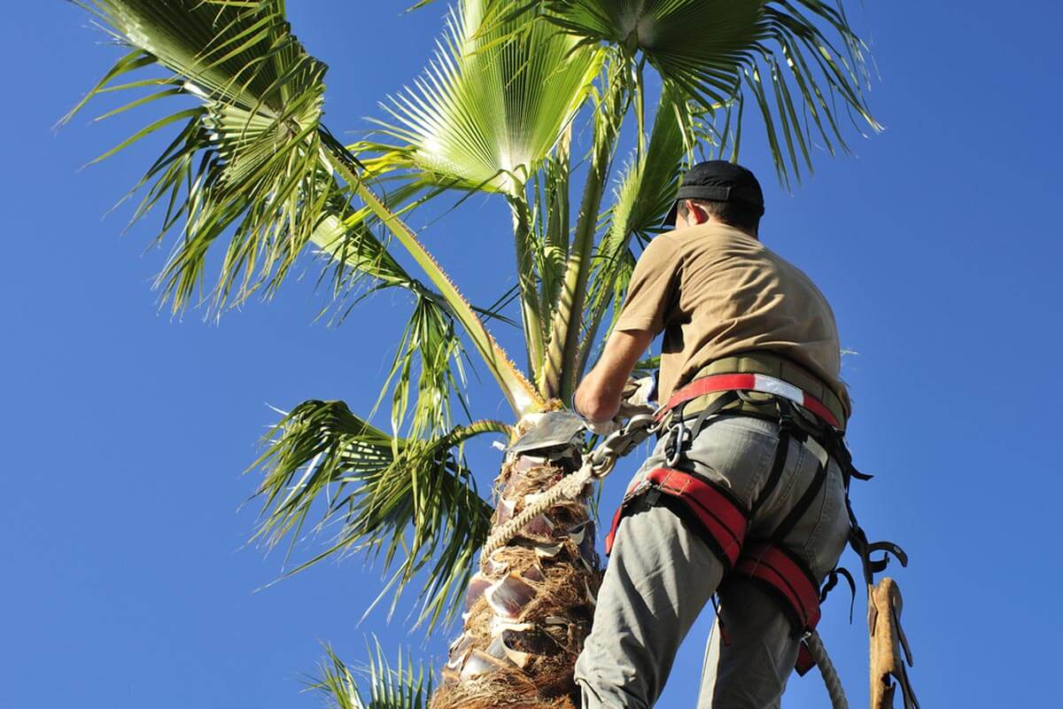 Palm Tree Trimming-National City CA Tree Trimming and Stump Grinding Services-We Offer Tree Trimming Services, Tree Removal, Tree Pruning, Tree Cutting, Residential and Commercial Tree Trimming Services, Storm Damage, Emergency Tree Removal, Land Clearing, Tree Companies, Tree Care Service, Stump Grinding, and we're the Best Tree Trimming Company Near You Guaranteed!
