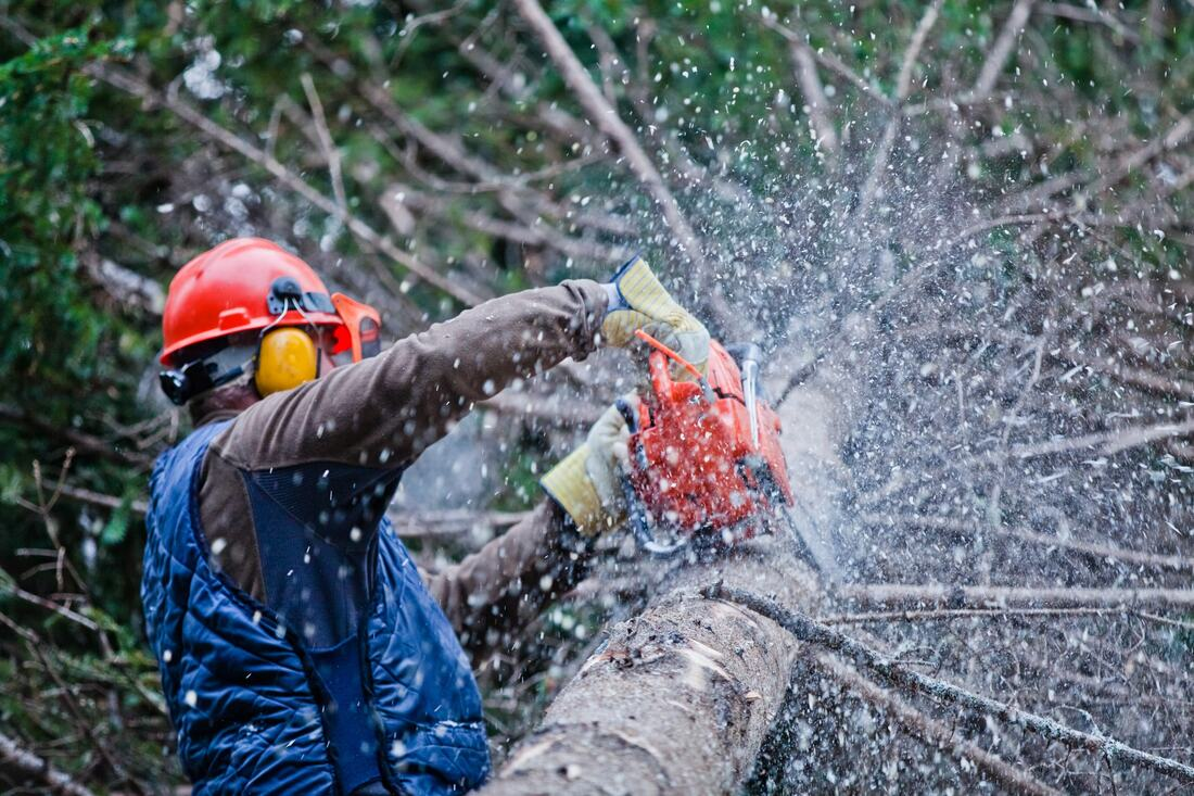 Paradise Hills-National City CA Tree Trimming and Stump Grinding Services-We Offer Tree Trimming Services, Tree Removal, Tree Pruning, Tree Cutting, Residential and Commercial Tree Trimming Services, Storm Damage, Emergency Tree Removal, Land Clearing, Tree Companies, Tree Care Service, Stump Grinding, and we're the Best Tree Trimming Company Near You Guaranteed!