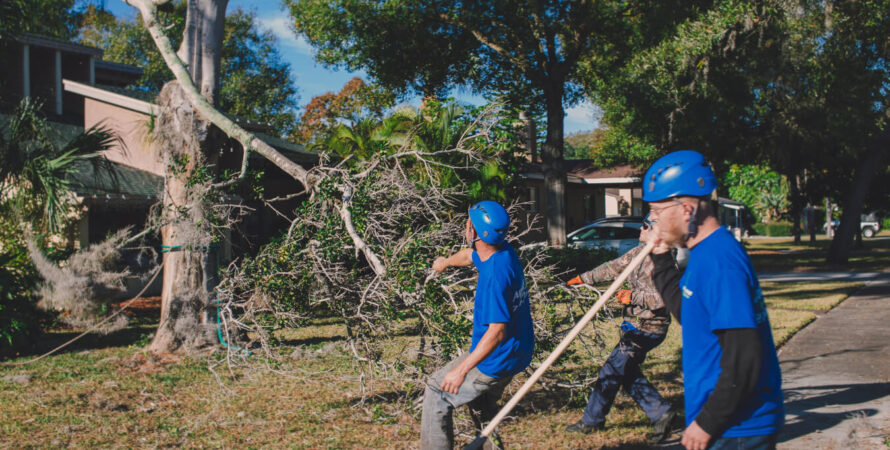 Residential Tree Services-National City CA Tree Trimming and Stump Grinding Services-We Offer Tree Trimming Services, Tree Removal, Tree Pruning, Tree Cutting, Residential and Commercial Tree Trimming Services, Storm Damage, Emergency Tree Removal, Land Clearing, Tree Companies, Tree Care Service, Stump Grinding, and we're the Best Tree Trimming Company Near You Guaranteed!