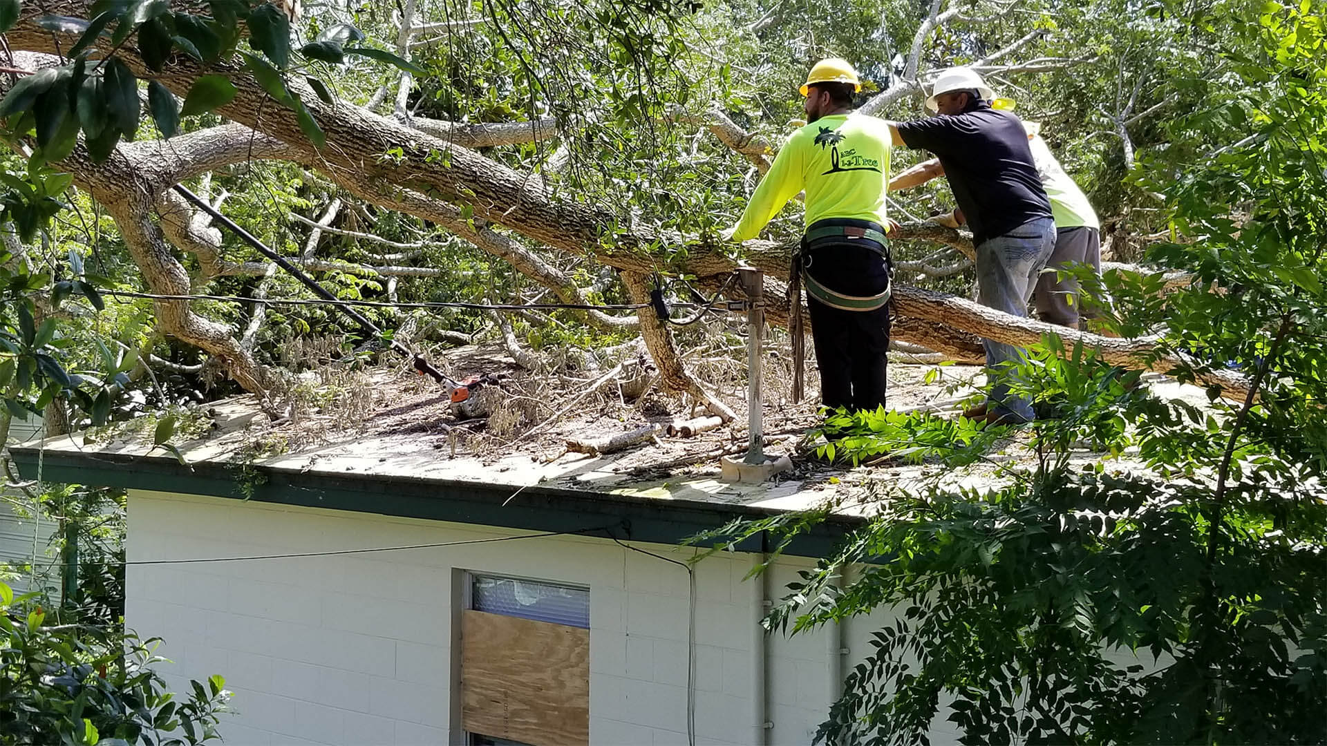 Storm Damage-National City CA Tree Trimming and Stump Grinding Services-We Offer Tree Trimming Services, Tree Removal, Tree Pruning, Tree Cutting, Residential and Commercial Tree Trimming Services, Storm Damage, Emergency Tree Removal, Land Clearing, Tree Companies, Tree Care Service, Stump Grinding, and we're the Best Tree Trimming Company Near You Guaranteed!