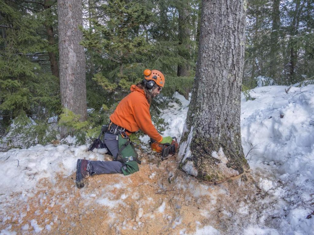 Tree Removal-National City CA Tree Trimming and Stump Grinding Services-We Offer Tree Trimming Services, Tree Removal, Tree Pruning, Tree Cutting, Residential and Commercial Tree Trimming Services, Storm Damage, Emergency Tree Removal, Land Clearing, Tree Companies, Tree Care Service, Stump Grinding, and we're the Best Tree Trimming Company Near You Guaranteed!