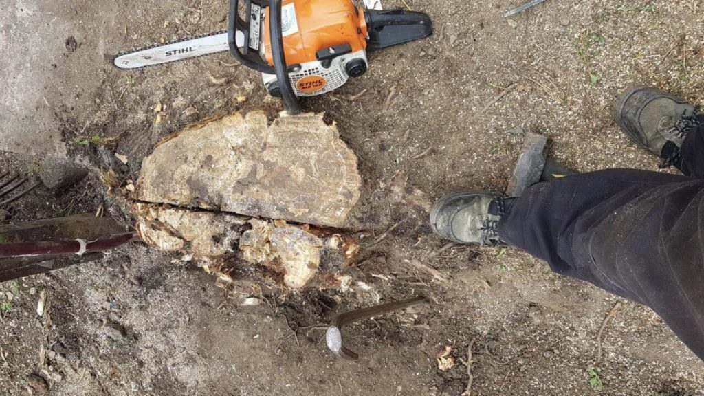 Tree Stump Grinding & Stump Removal-National City CA Tree Trimming and Stump Grinding Services-We Offer Tree Trimming Services, Tree Removal, Tree Pruning, Tree Cutting, Residential and Commercial Tree Trimming Services, Storm Damage, Emergency Tree Removal, Land Clearing, Tree Companies, Tree Care Service, Stump Grinding, and we're the Best Tree Trimming Company Near You Guaranteed!