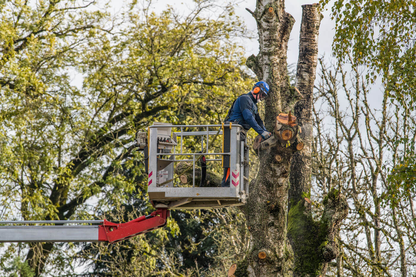 Tree Trimming-National City CA Tree Trimming and Stump Grinding Services-We Offer Tree Trimming Services, Tree Removal, Tree Pruning, Tree Cutting, Residential and Commercial Tree Trimming Services, Storm Damage, Emergency Tree Removal, Land Clearing, Tree Companies, Tree Care Service, Stump Grinding, and we're the Best Tree Trimming Company Near You Guaranteed!